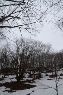 f:id:kurokoshusaru:20120327122559j:image