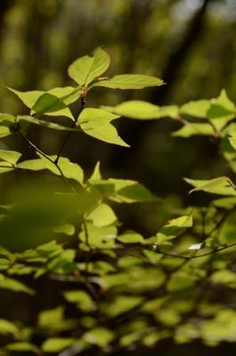 f:id:kurokoshusaru:20120514184652j:image