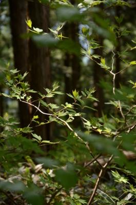 f:id:kurokoshusaru:20120514184712j:image