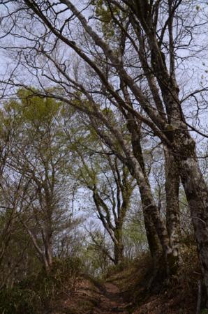 f:id:kurokoshusaru:20120515214426j:image