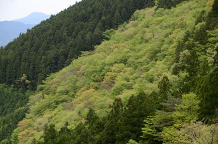 f:id:kurokoshusaru:20120515220802j:image