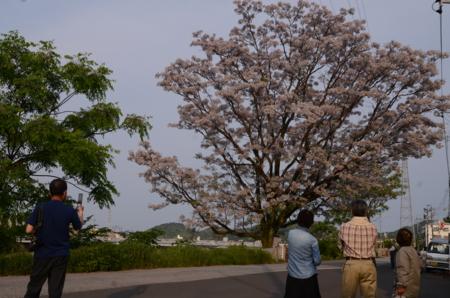 f:id:kurokoshusaru:20120517192750j:image