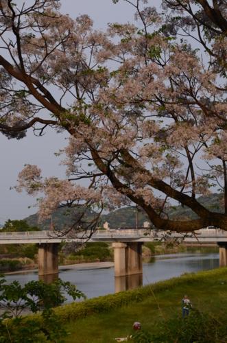 f:id:kurokoshusaru:20120517193330j:image
