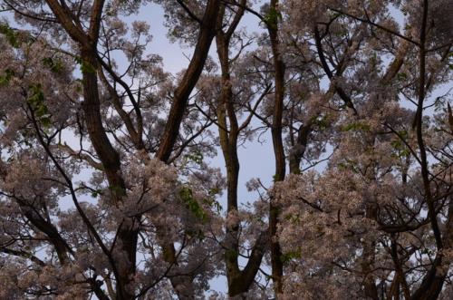f:id:kurokoshusaru:20120517200136j:image