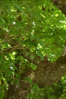 f:id:kurokoshusaru:20120602203055j:image