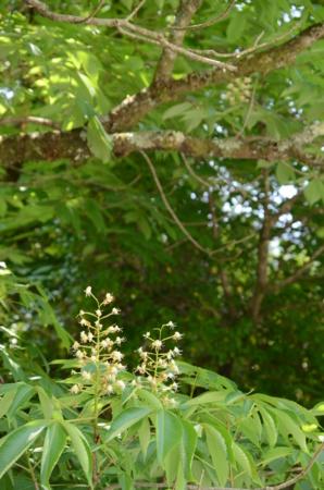 f:id:kurokoshusaru:20120602203945j:image