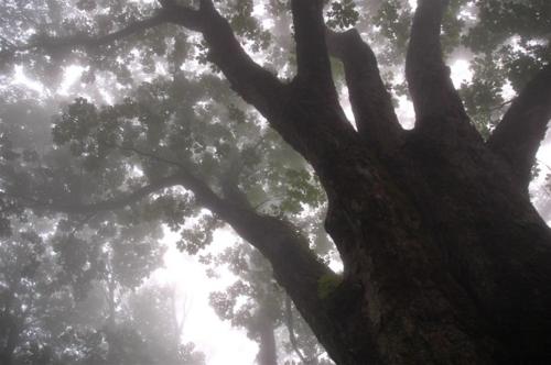 f:id:kurokoshusaru:20120604052840j:image