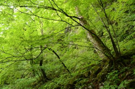 f:id:kurokoshusaru:20120605043034j:image