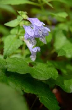 f:id:kurokoshusaru:20120605044332j:image