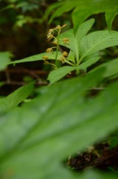 f:id:kurokoshusaru:20120605044844j:image