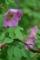 雨粒纏う残花
