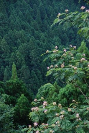 f:id:kurokoshusaru:20120722181939j:image