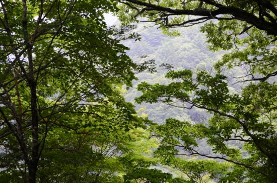 f:id:kurokoshusaru:20120729195133j:image