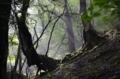 木漏れ日射す