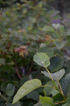 f:id:kurokoshusaru:20120731183117j:image