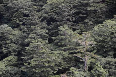 f:id:kurokoshusaru:20120806185729j:image