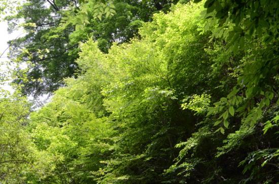 f:id:kurokoshusaru:20120808210524j:image
