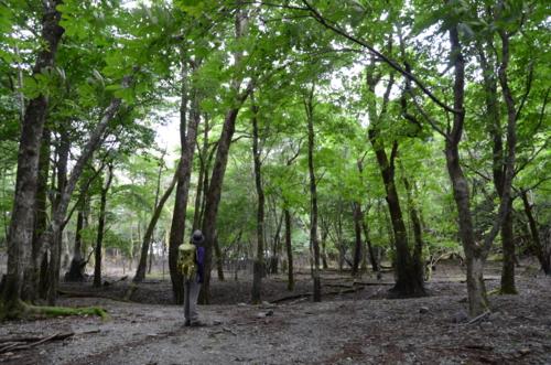 f:id:kurokoshusaru:20120808210602j:image