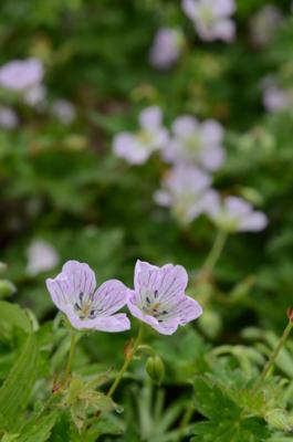 f:id:kurokoshusaru:20120811220829j:image