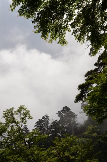 f:id:kurokoshusaru:20120811223821j:image