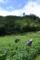 四万川の畑で