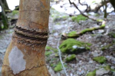 f:id:kurokoshusaru:20120924193654j:image
