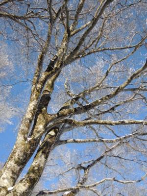 f:id:kurokoshusaru:20121118174700j:image