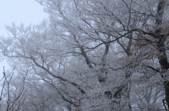 f:id:kurokoshusaru:20121225042457j:image
