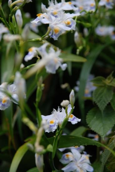 愛された花