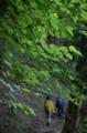 雨期の木々