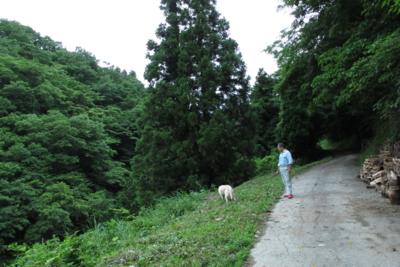 f:id:kurokoshusaru:20130627195112j:image