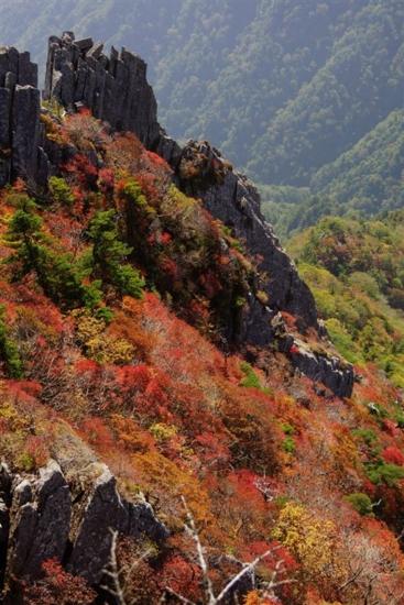 f:id:kurokoshusaru:20131019164822j:image