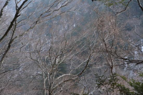 f:id:kurokoshusaru:20140205184821j:image