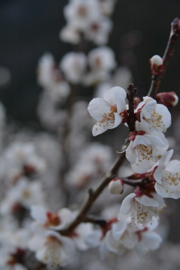 f:id:kurokoshusaru:20140316163949j:image