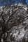 三嶺と山毛欅の老木