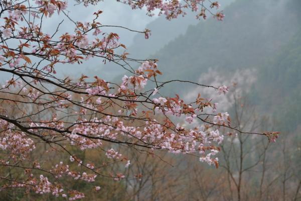 f:id:kurokoshusaru:20140401182739j:image