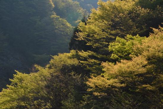f:id:kurokoshusaru:20140427102505j:image