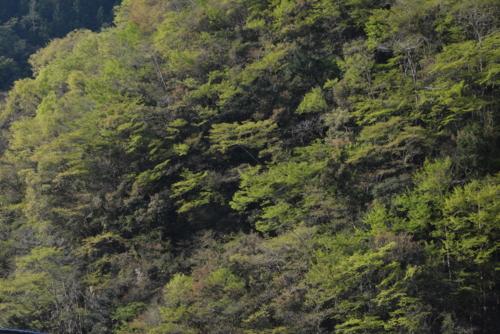 f:id:kurokoshusaru:20140427102524j:image