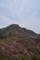 躑躅色の山