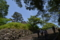 照葉樹の城