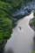 祖谷渓の新緑