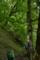 初夏の森へ 2