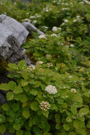 f:id:kurokoshusaru:20140703201853j:image