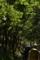 木洩れ日の道