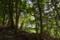 森の目覚め