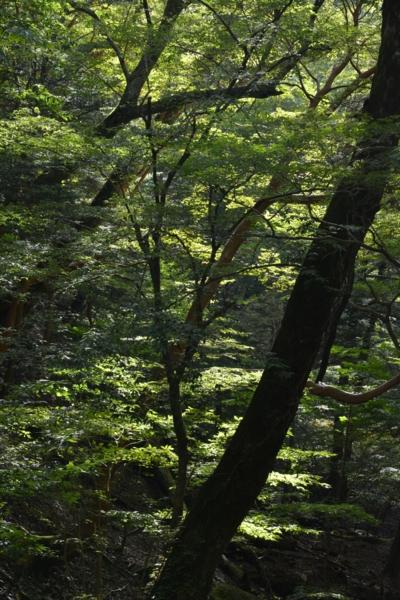 f:id:kurokoshusaru:20140928180152j:image