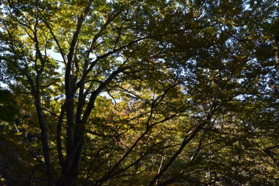 f:id:kurokoshusaru:20141021043019j:image