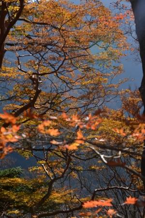 逆光の森2