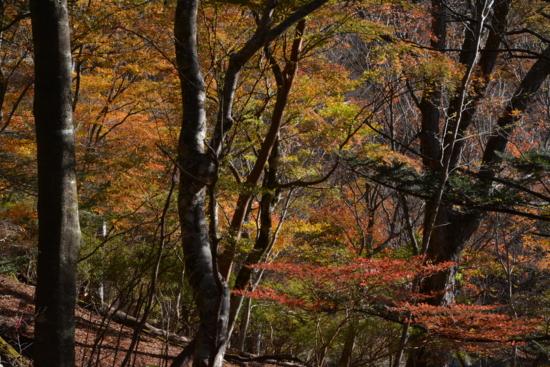 逆光の森3