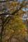 逆光の森4